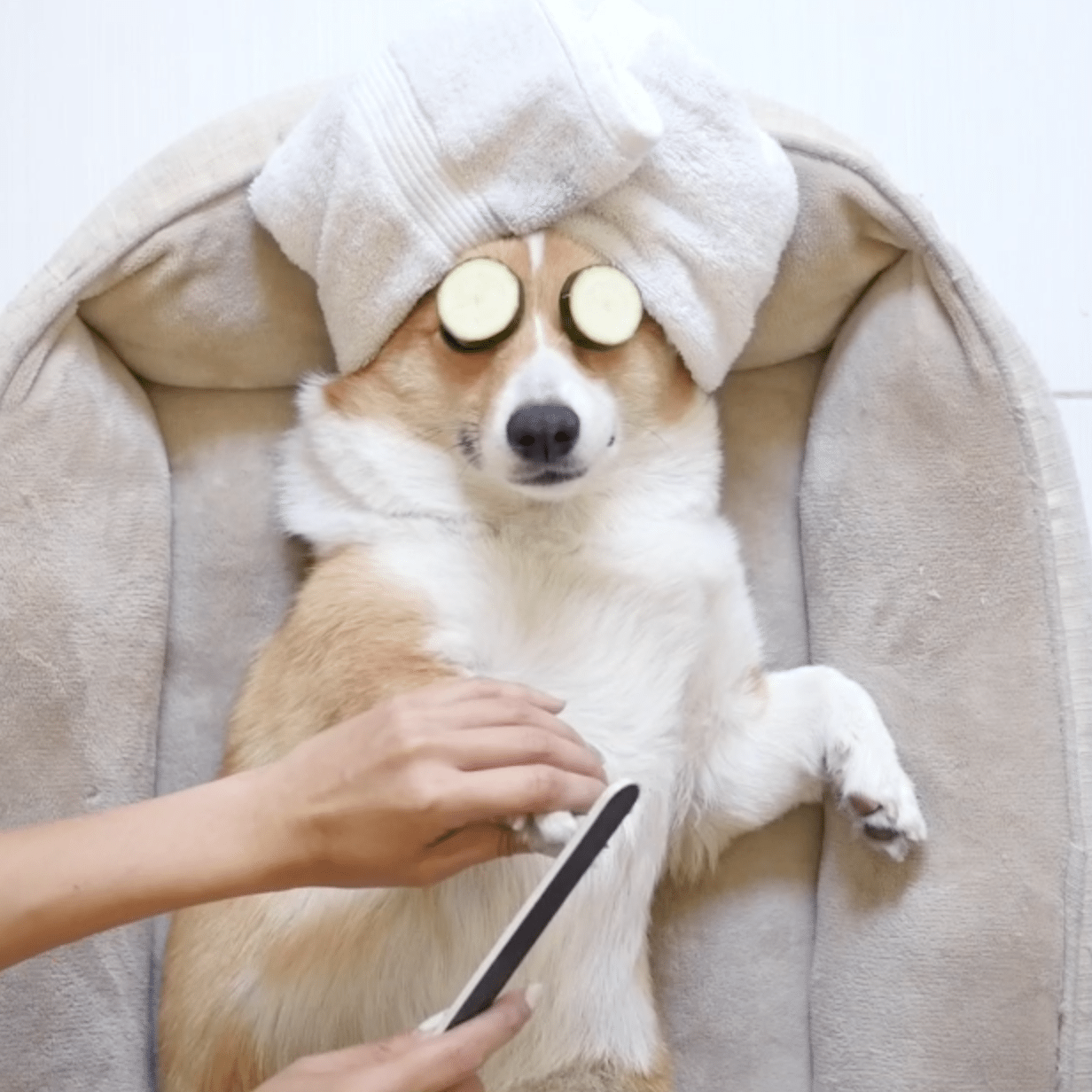 Dog Spa Day Pictures