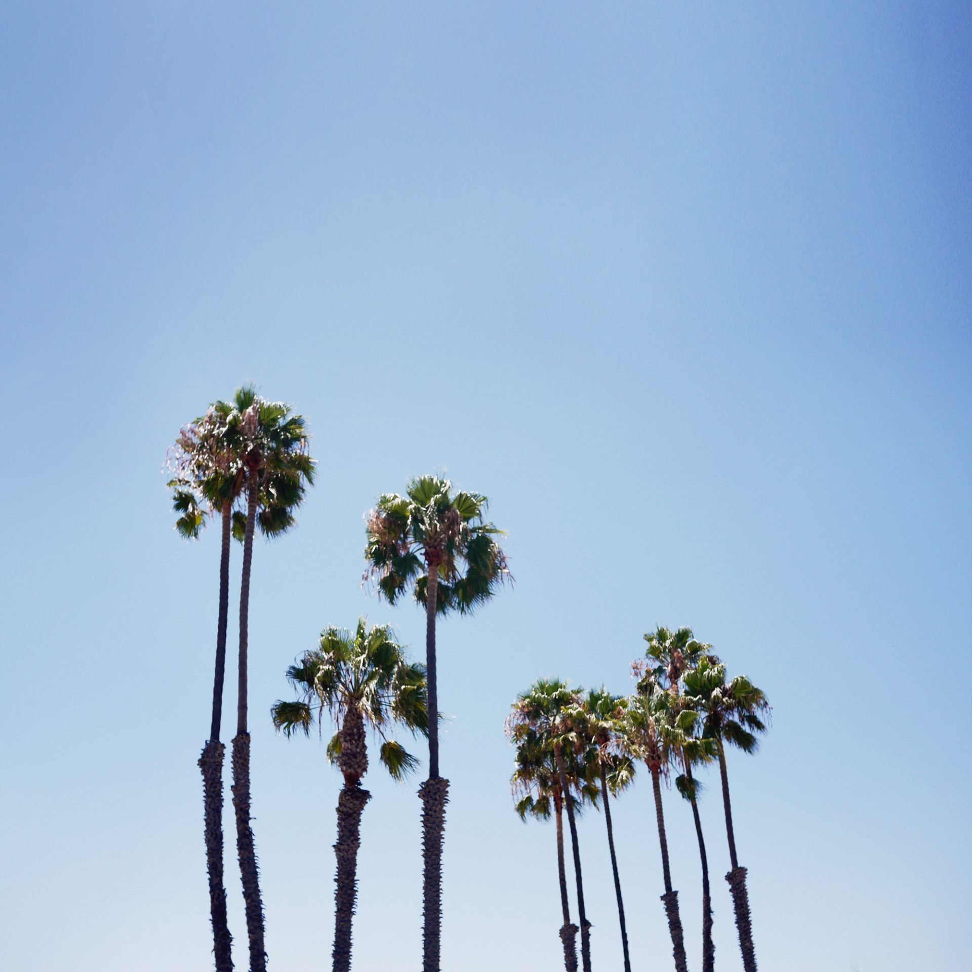 palmtrees-print