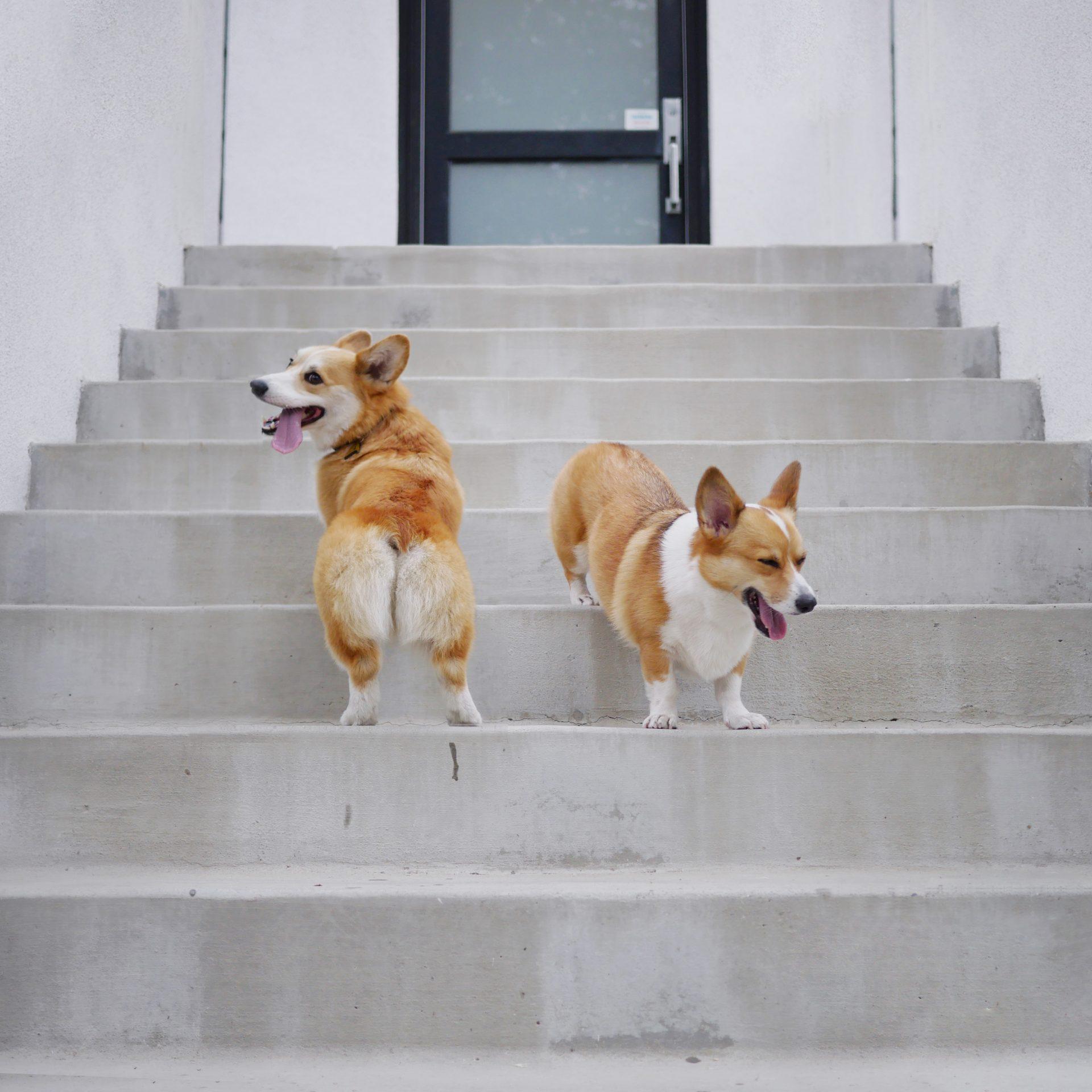 geordi chibi stairs