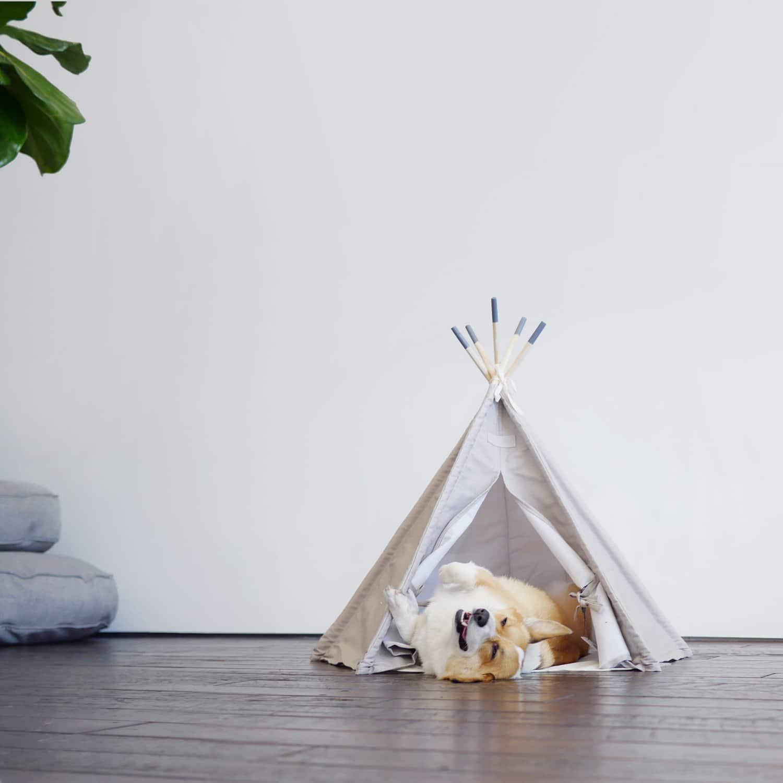 maxbone-tent