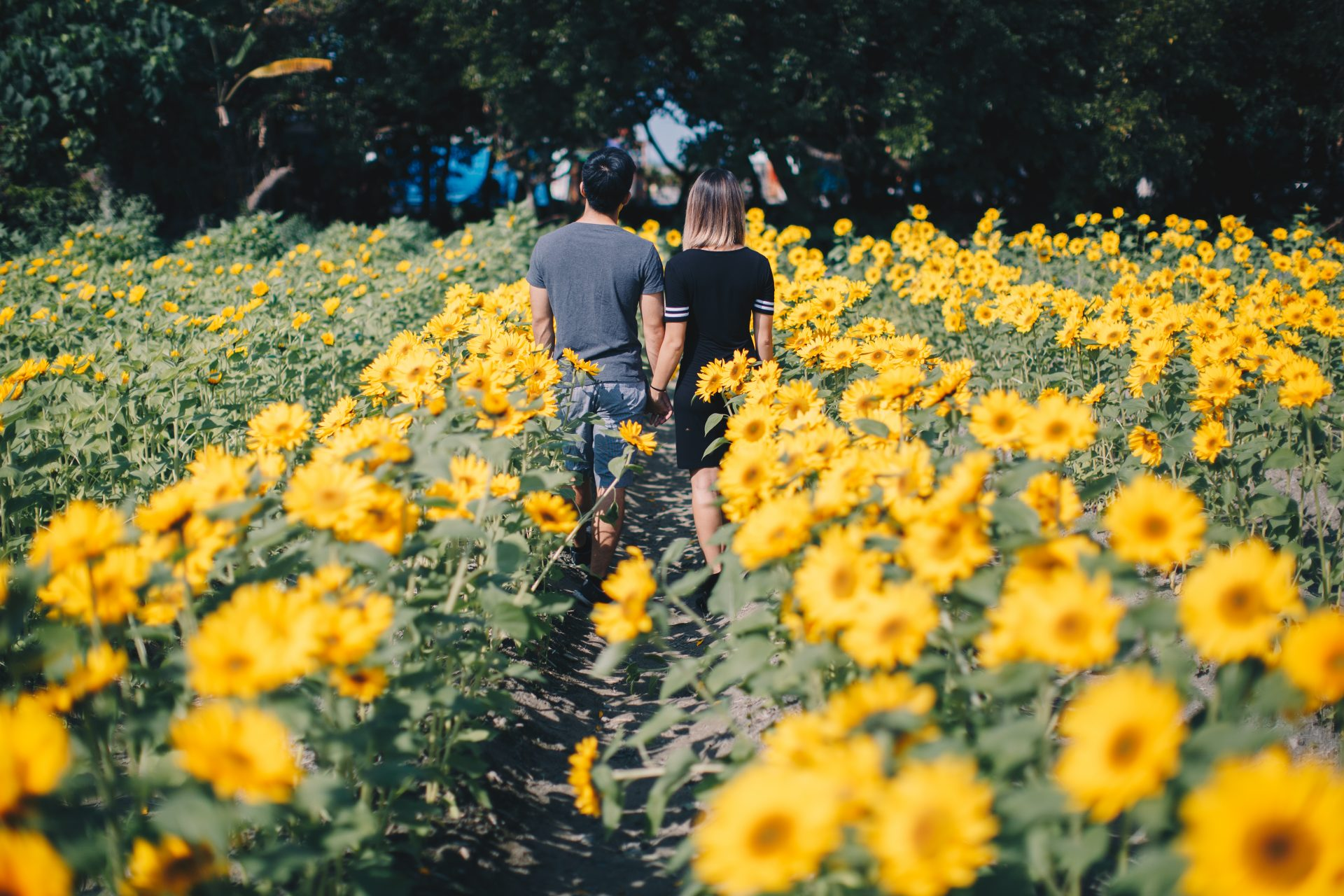 Flower field trip in pingtung taiwan where you can then transfer to take a regular train to pingtung there you can find plenty of tour buses or a cheap cab to take you to the exhibition izmirmasajfo